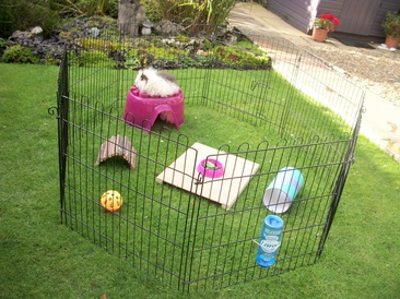 Caring for your guinea pig welcome to piggy purrfect for Outdoor guinea pig cage